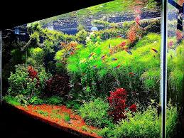 home design architecture aquascape aquarium designs diy aquascape