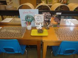 bird inquiry the curious kindergarten