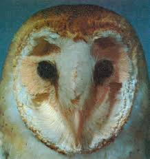 Barn Owl Sounds How The Owl Tracks Its Prey American Scientist