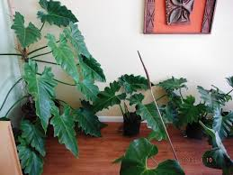 indoor tropical house plants best tropical house plants ideas