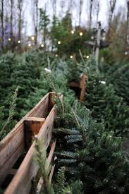 299 best bringing home the tree images on pinterest country