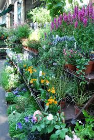 flowers garden city flowers in the city series u2013 pt 1 paris france the secret