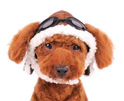 aviator hat with goggles for dogs u2013 daisey u0027s doggie chic
