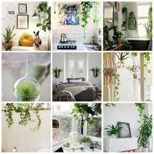 awesome indoor decorative plants photos amazing house decorating