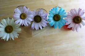 painted daisies simple science experiments for kids