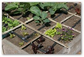 Veg Garden Layout Square Foot Vegetable Garden Plans Decorating Clear