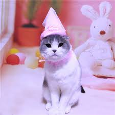 Kitten Costumes Halloween Dog Cats Costumes Halloween Doggie Kitty Princess Party Hats Pink