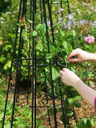 how to plant garden garden ideas