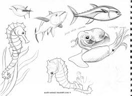 sea animal pic for sketching and drawing ocean animals drawings