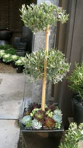 79 best topiaries images on pinterest topiaries plants and