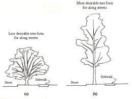 choosing attributes site analysis planting landscape plants