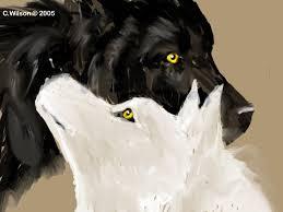 black wolf white wolf by windseeker on deviantart