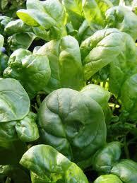 kick start your vegetable garden this winter