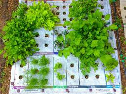 best 20 herb planters ideas on pinterest growing herbs why micro gardening could go big the salt npr