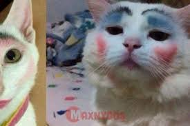 Meme Kucing - meme kucing makeup maxnyoos