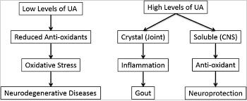 uric acid and inosine increases iq productivity and lifespan