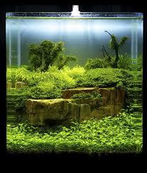 Aquascape Freshwater Aquarium Paladarium Aquariums Pinterest Aquariums Aquarium Ideas And