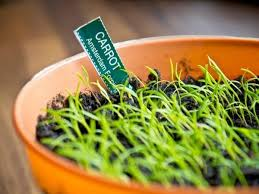 12 Best Plants That Can by 25 Herbs Vegetables U0026 Plants You Can Grow In Water