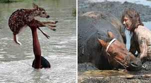 imagenes de animales y cosas 20 personas que hicieron asombrosas cosas por estos animales upsocl