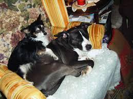 Petsmart Cashier Pay Petsmart Albany Ga 31707 Yp Com
