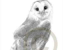 owl drawing etsy