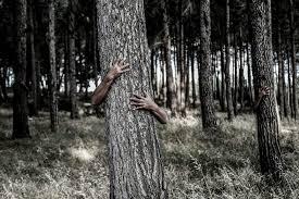 free photo hiding tree camouflage free image on