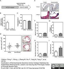 Moma Floor Plan Anti Mouse Macrophages Monocytes Antibody Clone Moma 2 Bio Rad