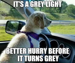 Driving Meme - golden retriever driving imgflip