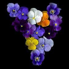imagenes flores bellisimas las mas bellas flores del mundo fotos flor el mundo y bellisima