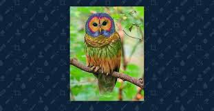 Art Student Owl Meme - fact check is this a photograph of a rainbow owl