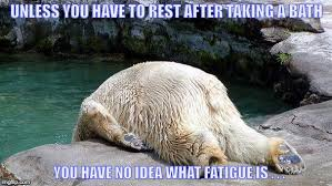 Bear Stuff Meme - tired bear memes imgflip