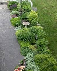 Solar Lights For Driveway by Plants For Side Of Driveway