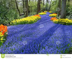 lane of flowers in dutch spring garden royalty free stock