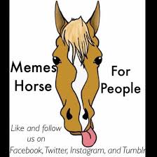 Memes Facebook - memes for horse people home facebook