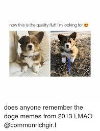 Doge Girl Meme - 25 best memes about doge meme doge memes