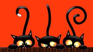 halloween cat wallpaper wallpapers browse