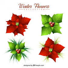 christmas flowers pack of christmas flowers and mistletoe vector premium