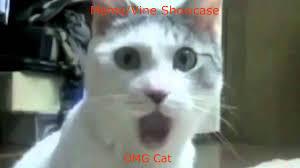Omg Cat Meme - omg cat meme vine showcase youtube