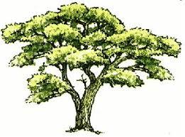 adopt a tree program city of garden grove