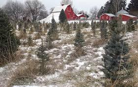 where to get a fresh cut christmas tree in east idaho east idaho