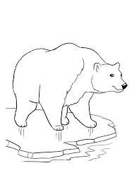 photos winter polar bear coloring 2014 winter