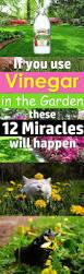 12 amazing vinegar uses in garden balcony garden web