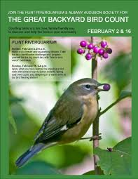 great backyard bird count the metrogazette