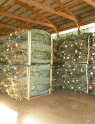 wholesale christmas best wholesale christmas trees