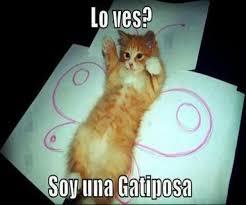 imagenes chistosas y tiernas fotos de adorables gatos con frases graciosas para descargar