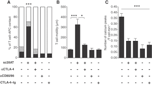 inducing ctla 4 u2013dependent immune regulation by selective cd28