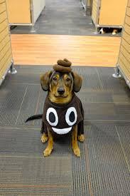 Dog Costume Halloween U0027s Favorite Emoji Happy Howloween Dog Halloween Emoji