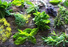 native american healing plants herbs u0026 the summer solstice traditional medicinals
