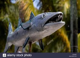 a made ornamental carp fish stock photo royalty free image
