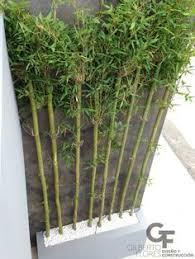 par vue de jardin bambou en pot brise vue naturel et déco sur la terrasse